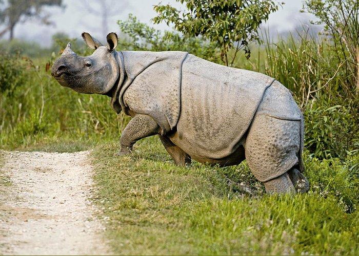 Rhinoceros Unicornis Greeting Card featuring the photograph Indian Rhinoceros by Tony Camacho