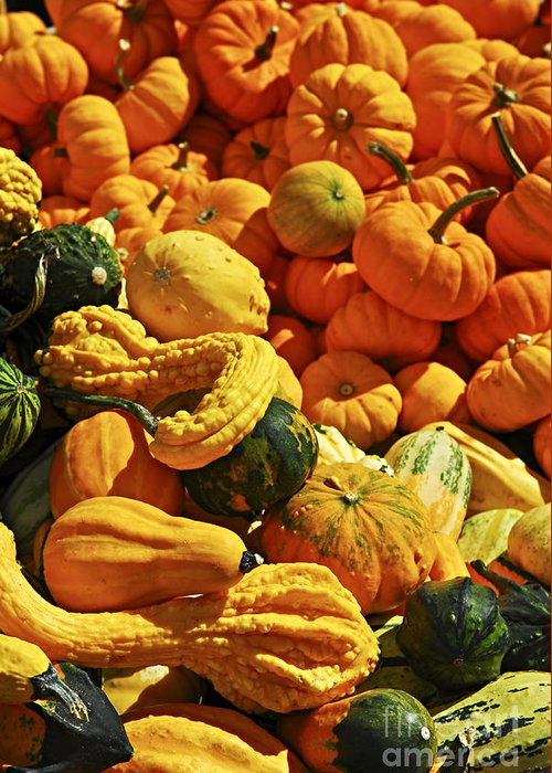 Pumpkin Greeting Card featuring the photograph Pumpkins And Gourds by Elena Elisseeva