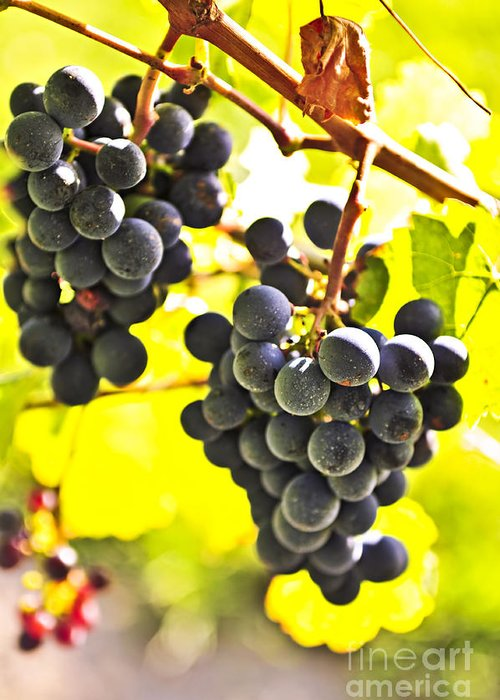 Red Greeting Card featuring the photograph Red Grapes by Elena Elisseeva