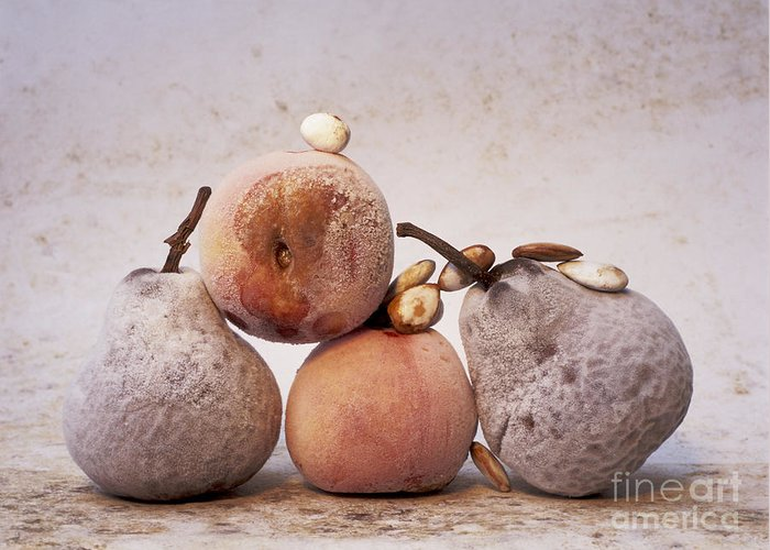 Vitamins Greeting Card featuring the photograph Rotten Pears And Apple. by Bernard Jaubert