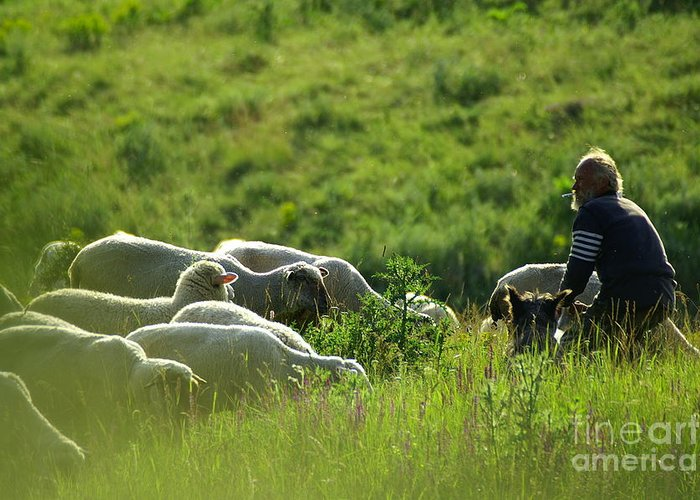 Nature Greeting Card featuring the photograph Shepherd by Odon Czintos