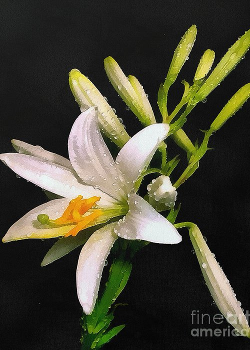 Pattern Greeting Card featuring the painting The Lily by Odon Czintos