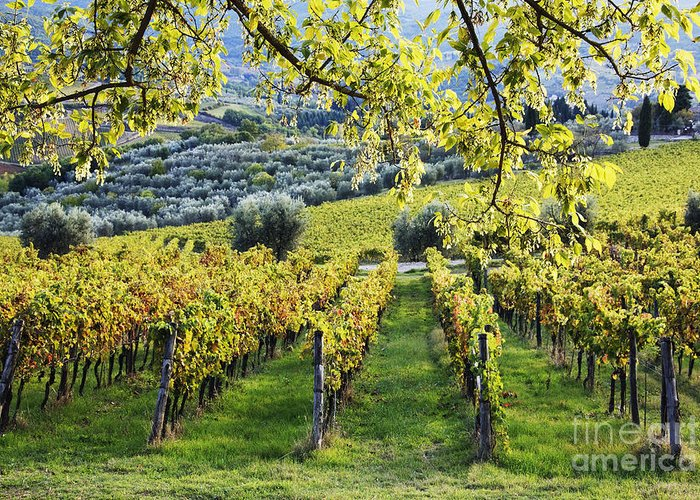 Agriculture Greeting Card featuring the photograph Vineyards And Olive Groves by Jeremy Woodhouse