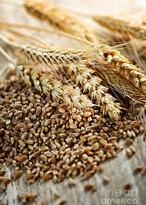 Wheat Greeting Card featuring the photograph Wheat Ears And Grain by Elena Elisseeva