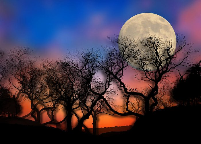Trees Greeting Card featuring the photograph 2033 by Peter Holme III