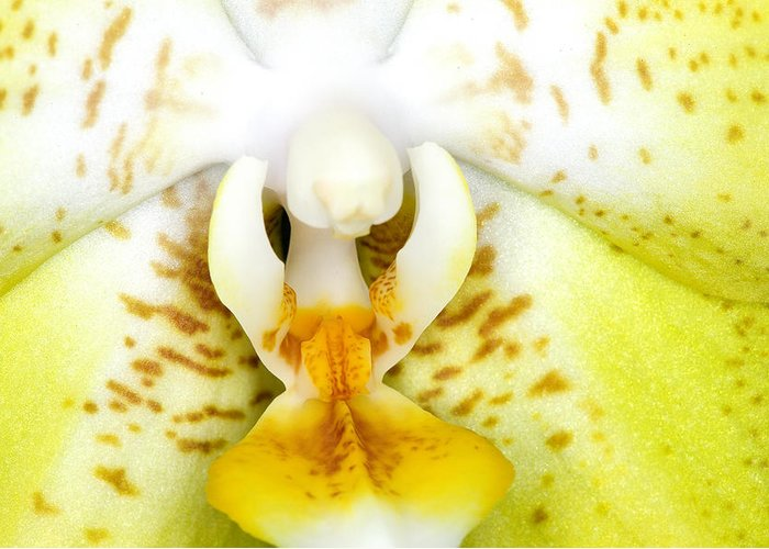 Ribet Greeting Card featuring the photograph Exotic Orchids Of C Ribet by C Ribet