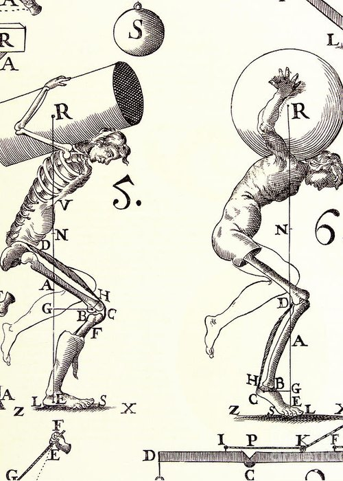 Anatomy Greeting Card featuring the photograph Biomechanics by Science Source