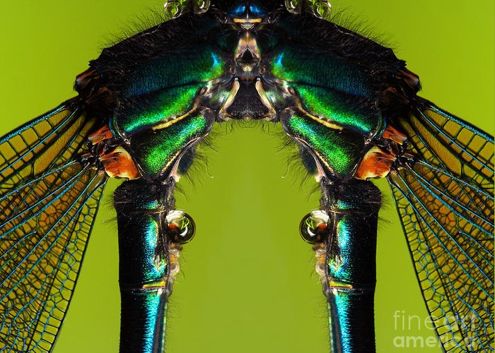 Nature Greeting Card featuring the photograph Insect by Odon Czintos