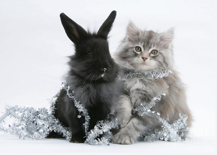 Animal Greeting Card featuring the photograph Kitten And Rabbit Getting Into Tinsel by Mark Taylor