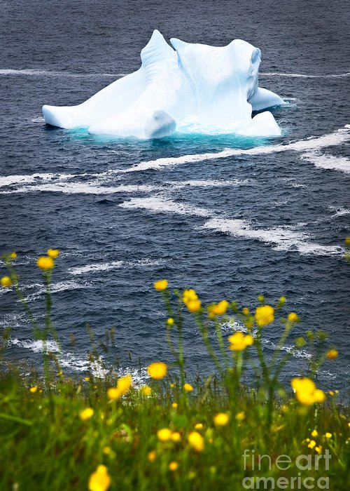 Iceberg Greeting Card featuring the photograph Melting Iceberg by Elena Elisseeva
