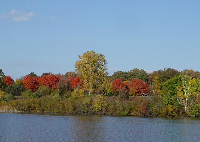 Brilliant Autumn Colors Greeting Card featuring the photograph October In Michigan by Margrit Schlatter