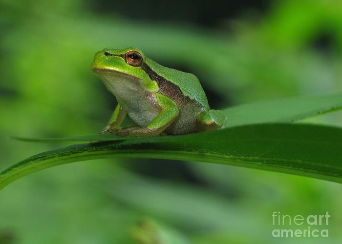 Nature Greeting Card featuring the photograph Tree Frog by Odon Czintos