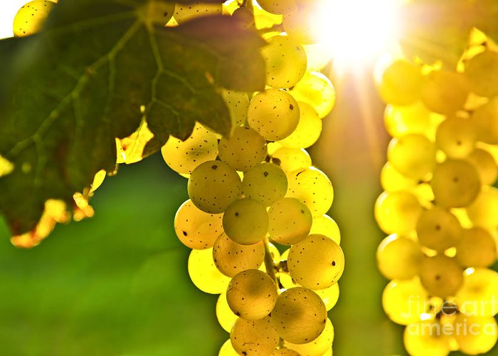 Green Greeting Card featuring the photograph Yellow Grapes by Elena Elisseeva