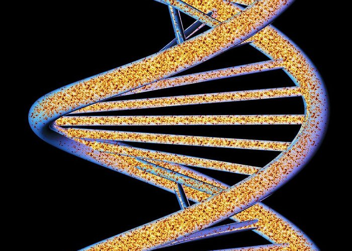 Dna Greeting Card featuring the photograph Dna Molecule, Artwork by Pasieka