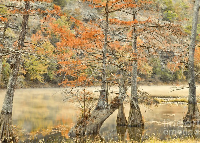 Landscape Greeting Card featuring the photograph Cypress Trees In The Mist by Iris Greenwell