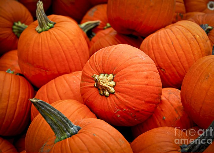 Fall Greeting Card featuring the photograph Pumpkins by Elena Elisseeva