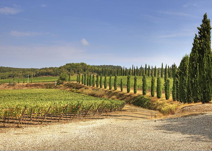 Vineyards Greeting Card featuring the photograph Tuscany by Joana Kruse