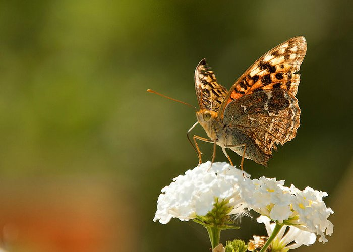 Wild Flowers Greeting Card featuring the photograph Butterfly On Blooming Flowers by Manolis Tsantakis