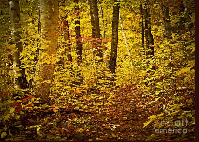 Countryside Greeting Card featuring the photograph Fall Forest by Elena Elisseeva