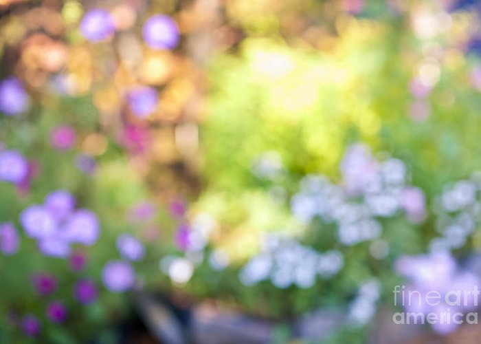 Flower Greeting Card featuring the photograph Flower Garden In Sunshine by Elena Elisseeva