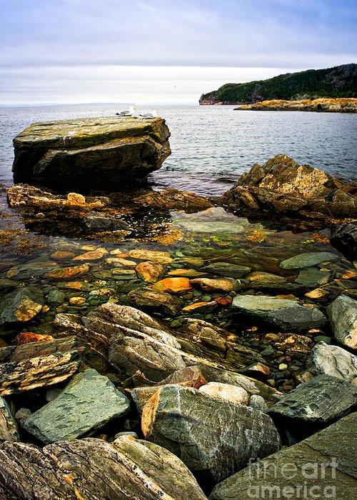 Coast Greeting Card featuring the photograph Atlantic Coast In Newfoundland by Elena Elisseeva