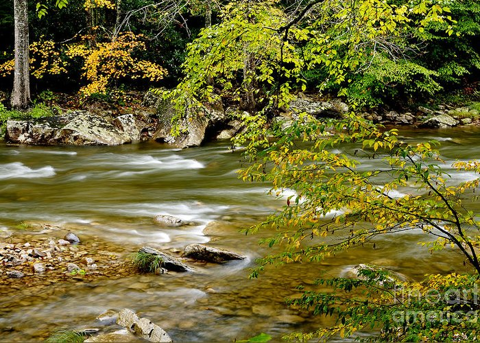 West Virginia Greeting Card featuring the photograph Fall Along Williams River by Thomas R Fletcher