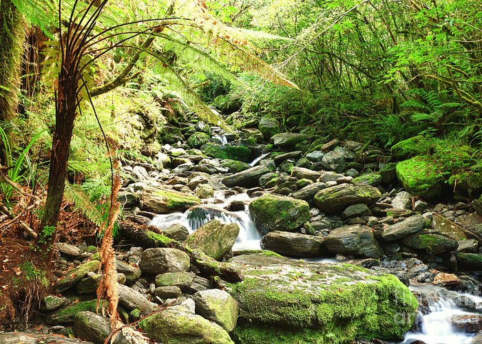 Native Greeting Card featuring the photograph Stream by MotHaiBaPhoto Prints