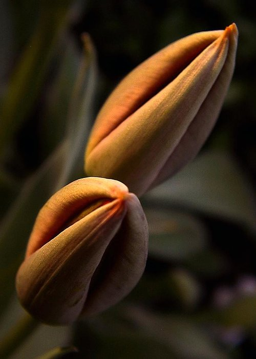 Abstract Greeting Card featuring the photograph Tulips by Odon Czintos