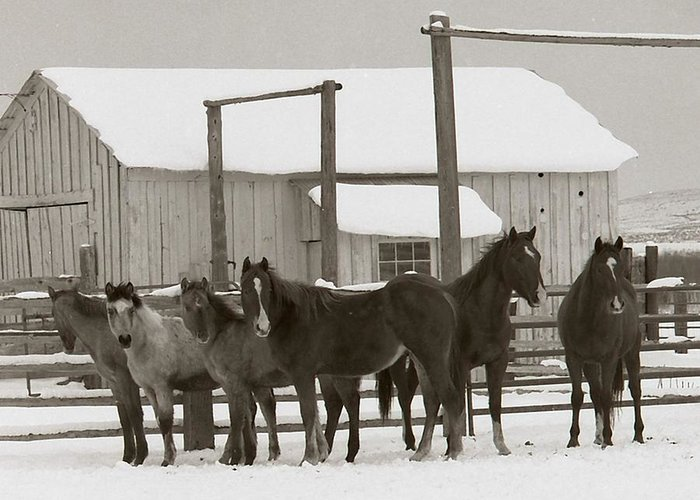 Horses Greeting Card featuring the photograph 71 Ranch by Diane Bohna