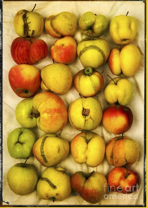 Aging Process Greeting Card featuring the photograph Apples by Bernard Jaubert