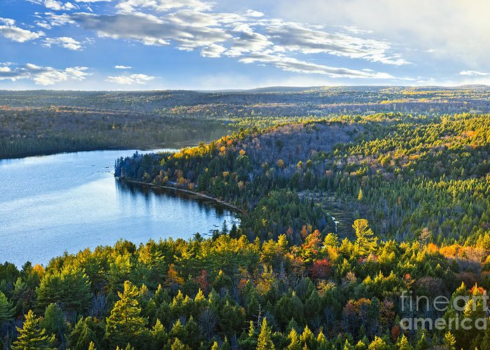 Forest Greeting Card featuring the photograph Fall Forest And Lake by Elena Elisseeva