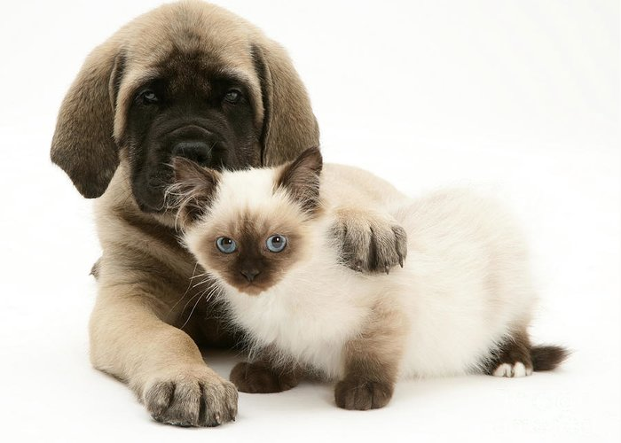 Animal Greeting Card featuring the photograph Puppy And Kitten by Jane Burton