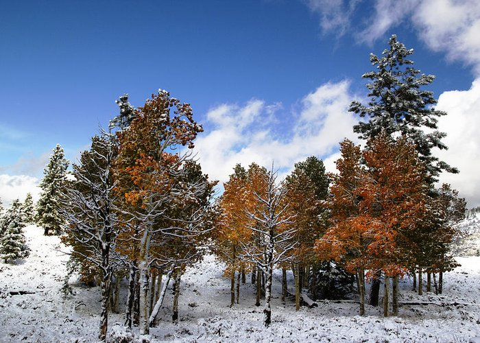 Autumn Photographs Greeting Card featuring the photograph Rocky Mountain Fall by Mark Smith