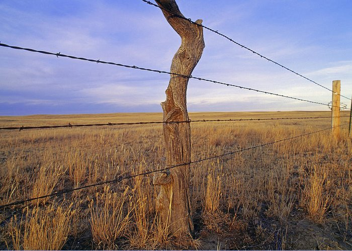 Phillips County Greeting Card featuring the photograph A Barbed Wire Fence Stretches by Gordon Wiltsie