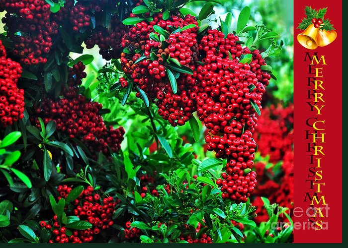 Photography Greeting Card featuring the photograph A Berry Merry Christmas by Kaye Menner