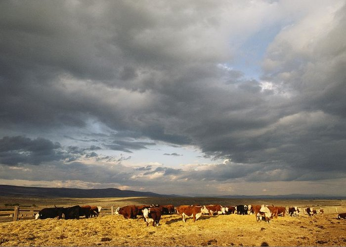 Animals Greeting Card featuring the photograph A Cloud-filled Sky Over A Yakima Valley by Sisse Brimberg