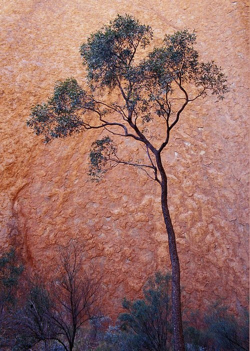 Desert Bloodwood Tree Greeting Card featuring the photograph A Desert Bloodwood Tree Against The Red by Jason Edwards