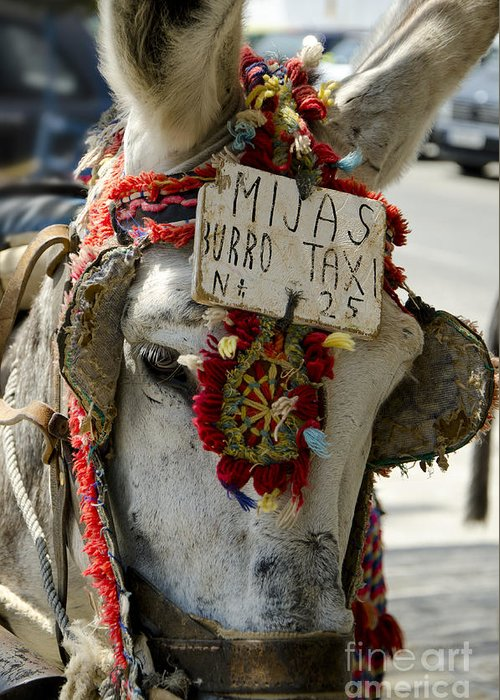 Donkey Greeting Card featuring the photograph A Donkey Taxi In A Village Of Spain by Perry Van Munster
