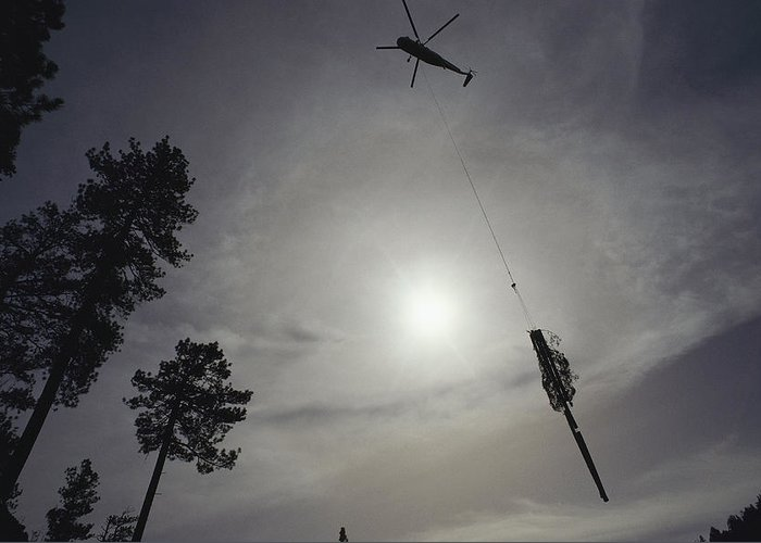 North America Greeting Card featuring the photograph A Helicopter Lifts Cut Timber by Joel Sartore
