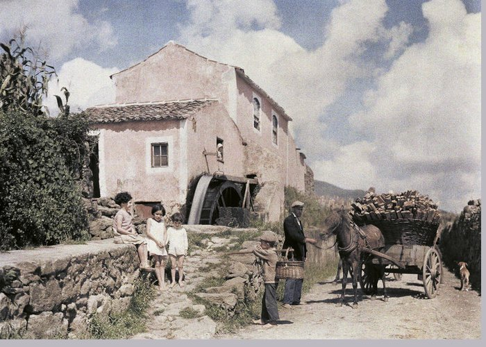 Day Greeting Card featuring the photograph A Man Transports Wood In Terceira by Wilhelm Tobien