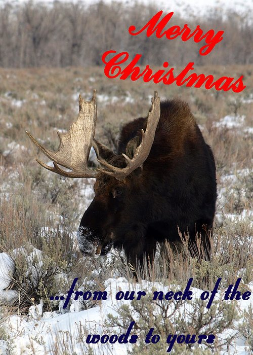 Christmas Cards Greeting Card featuring the photograph A Moose Christmas Wish by DeeLon Merritt