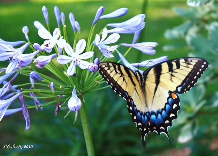 Butterfly Greeting Card featuring the photograph A New Day by LC Linda Scott