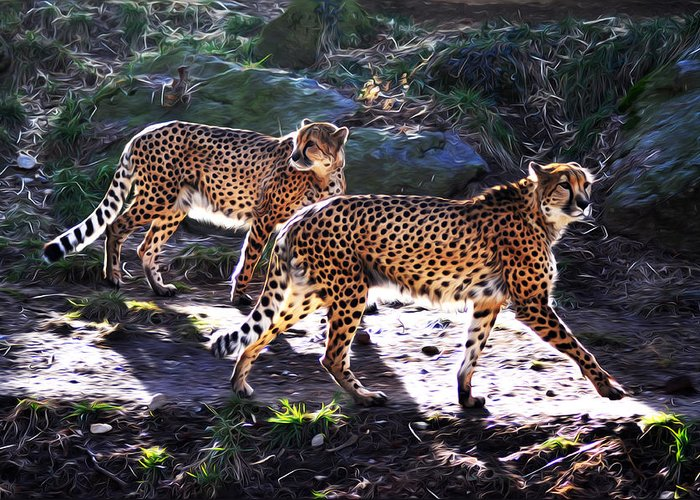 A Pair Of Cheetah's Greeting Card featuring the photograph A Pair Of Cheetah's by Bill Cannon