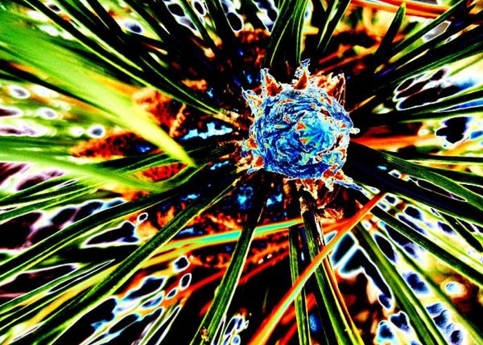 Pine Greeting Card featuring the photograph A Piney Abstract by Beth Akerman