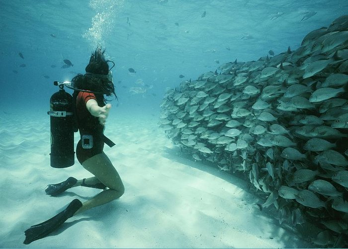 Grunt Fish Greeting Card featuring the photograph A School Of Grunts Swims By A Diver by Nick Caloyianis