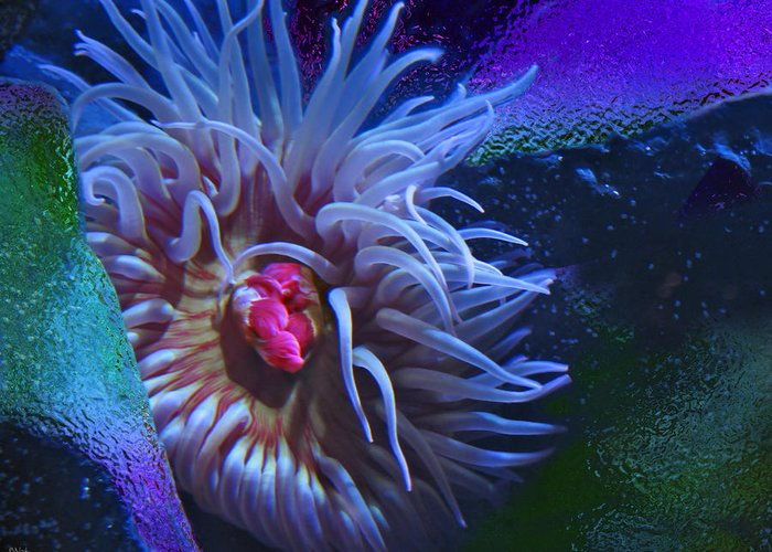Sea Anemone Greeting Card featuring the photograph A Sea Anemone by Natalya Shvetsky