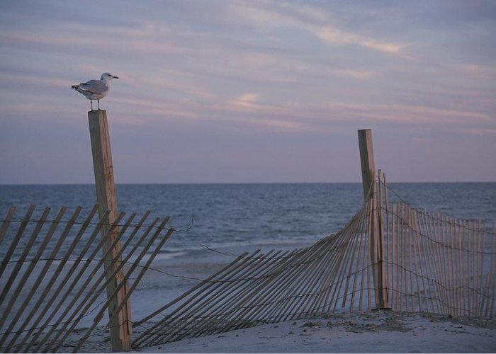 North America Greeting Card featuring the photograph A Seagull Pauses by Stacy Gold