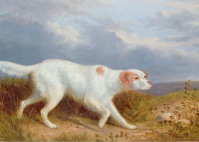 A Setter On The Moor Greeting Card featuring the painting A Setter On The Moor by Philip Reinagle
