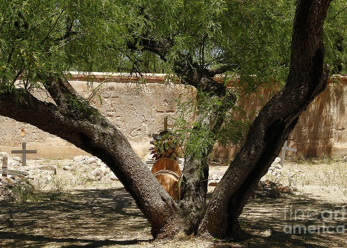 Arizona Greeting Card featuring the photograph A Shady Rest by Kathy McClure
