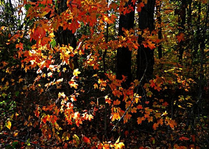 Autumn Scenes Greeting Card featuring the photograph A Slash Of Sunlight by Julie Dant
